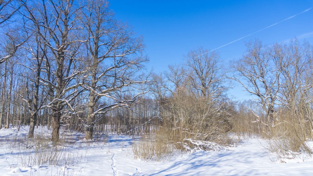 Estland-winter