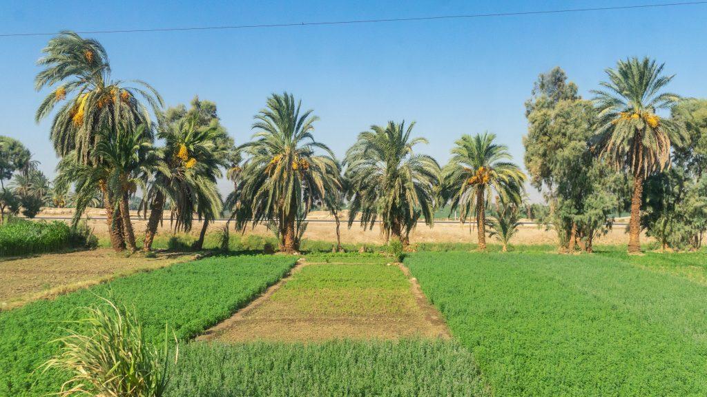 Aswan-Egypte