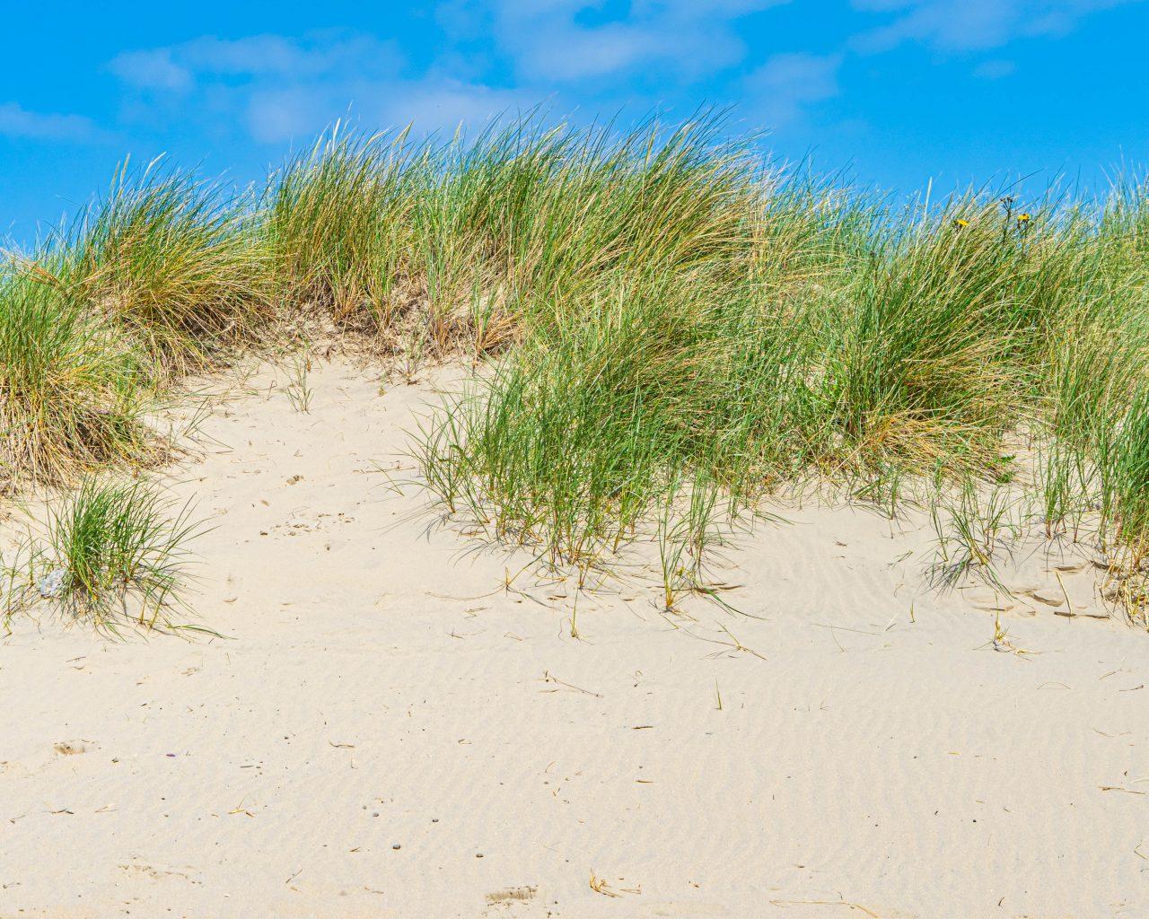 Treinreizen-Nederland-Texel-duinen