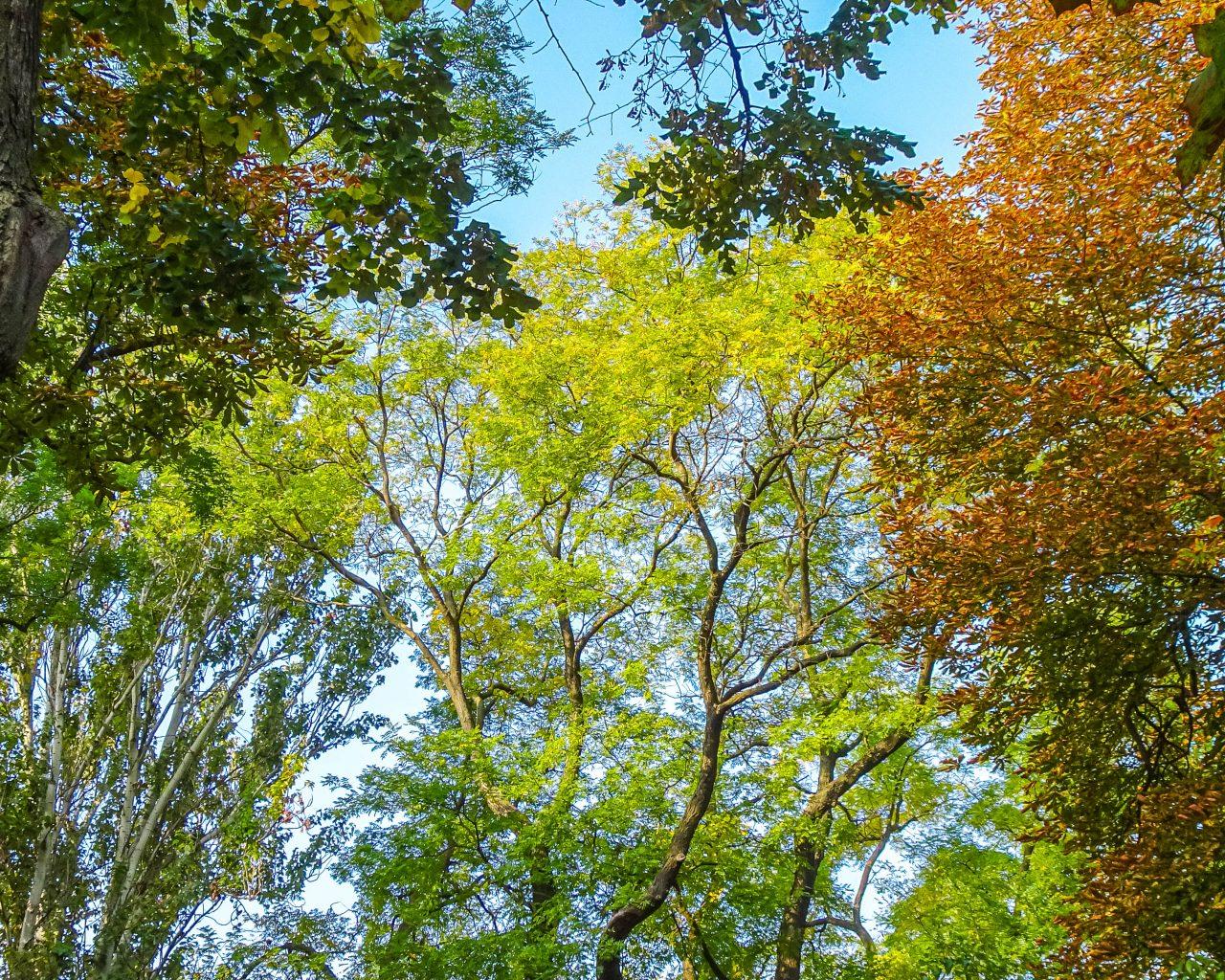 Kleurrijke-bomen-in-herfst-Odessa