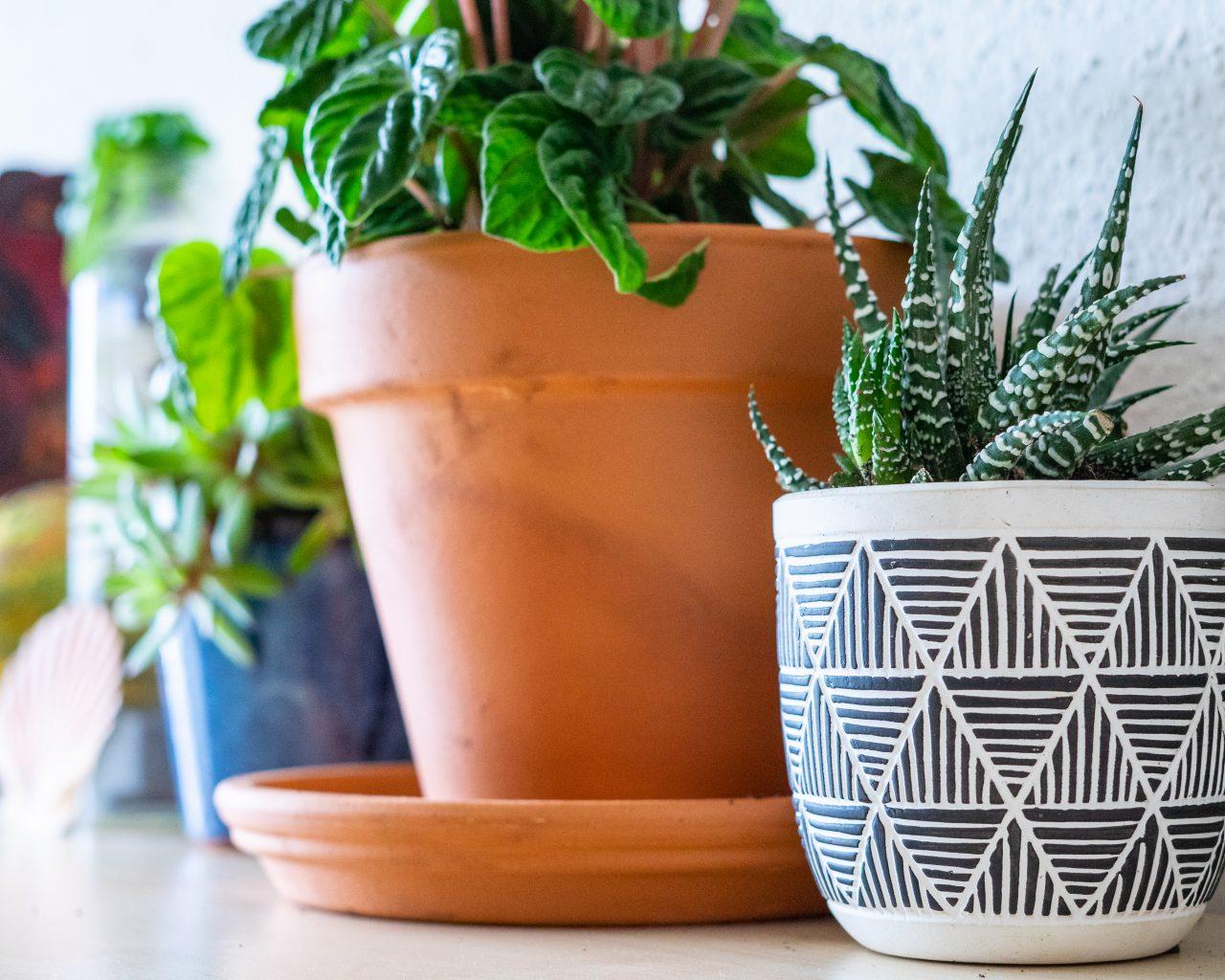 verschillende-makkelijke-kamerplanten-op-een-rij