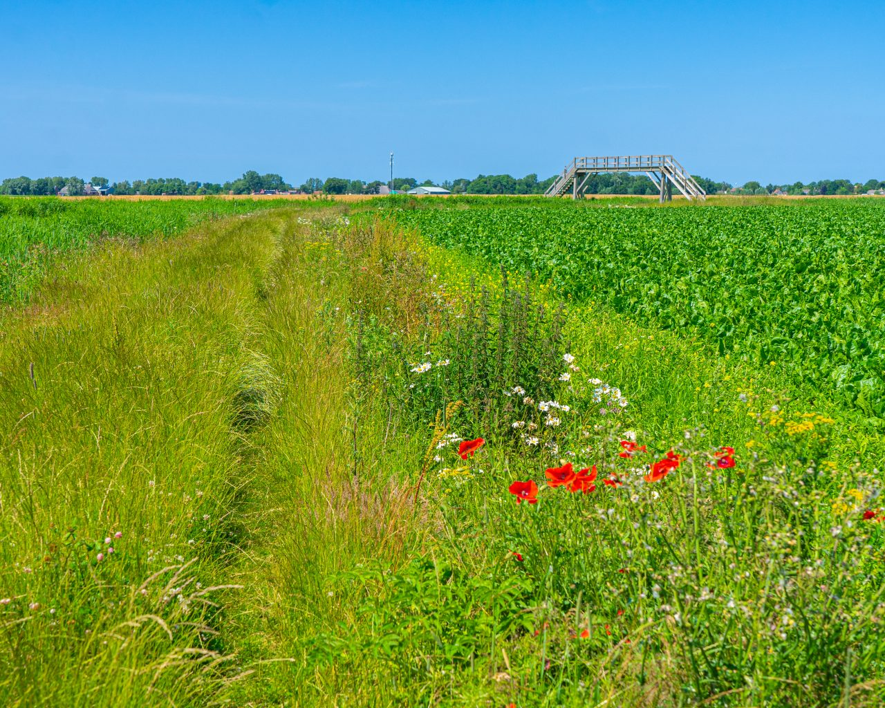 Akkerbloemen-en-hoog-gras-Pieterpad-etappe-1