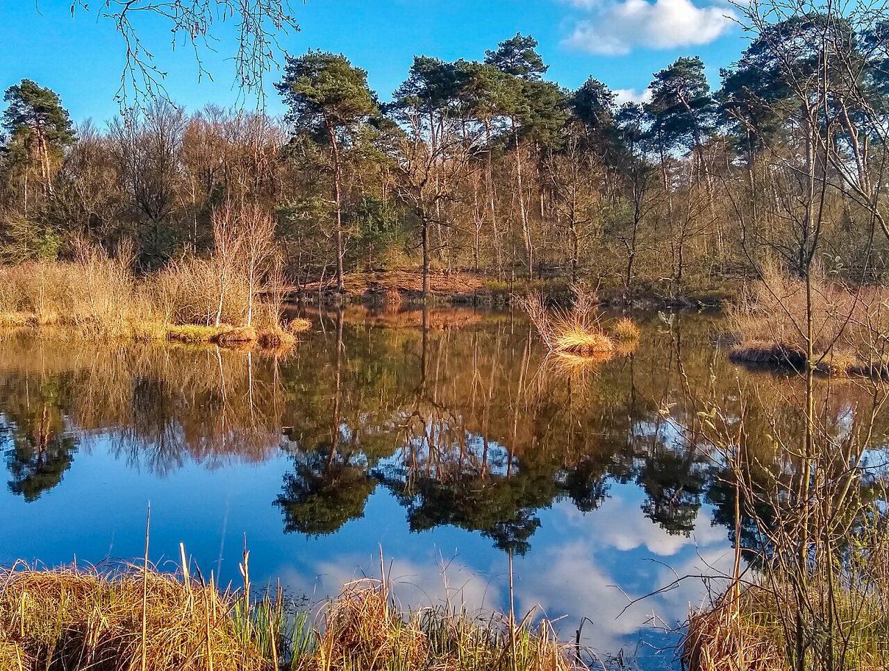 vennen-tijdens-14-vennenwandeling-oisterwijk-brabant