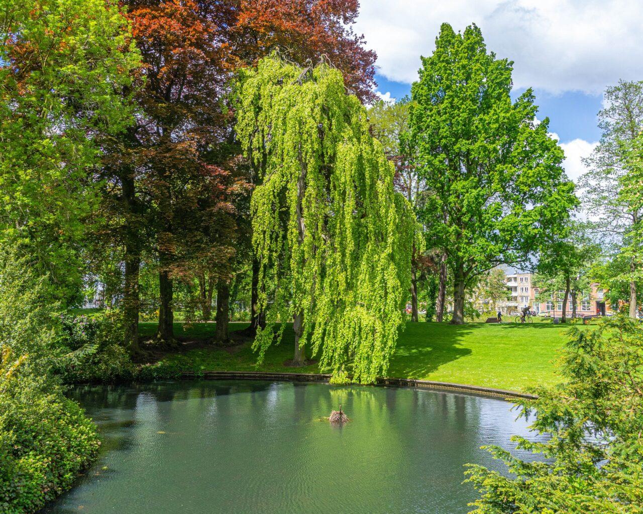 Vijver-in-park-Valkenberg-Breda