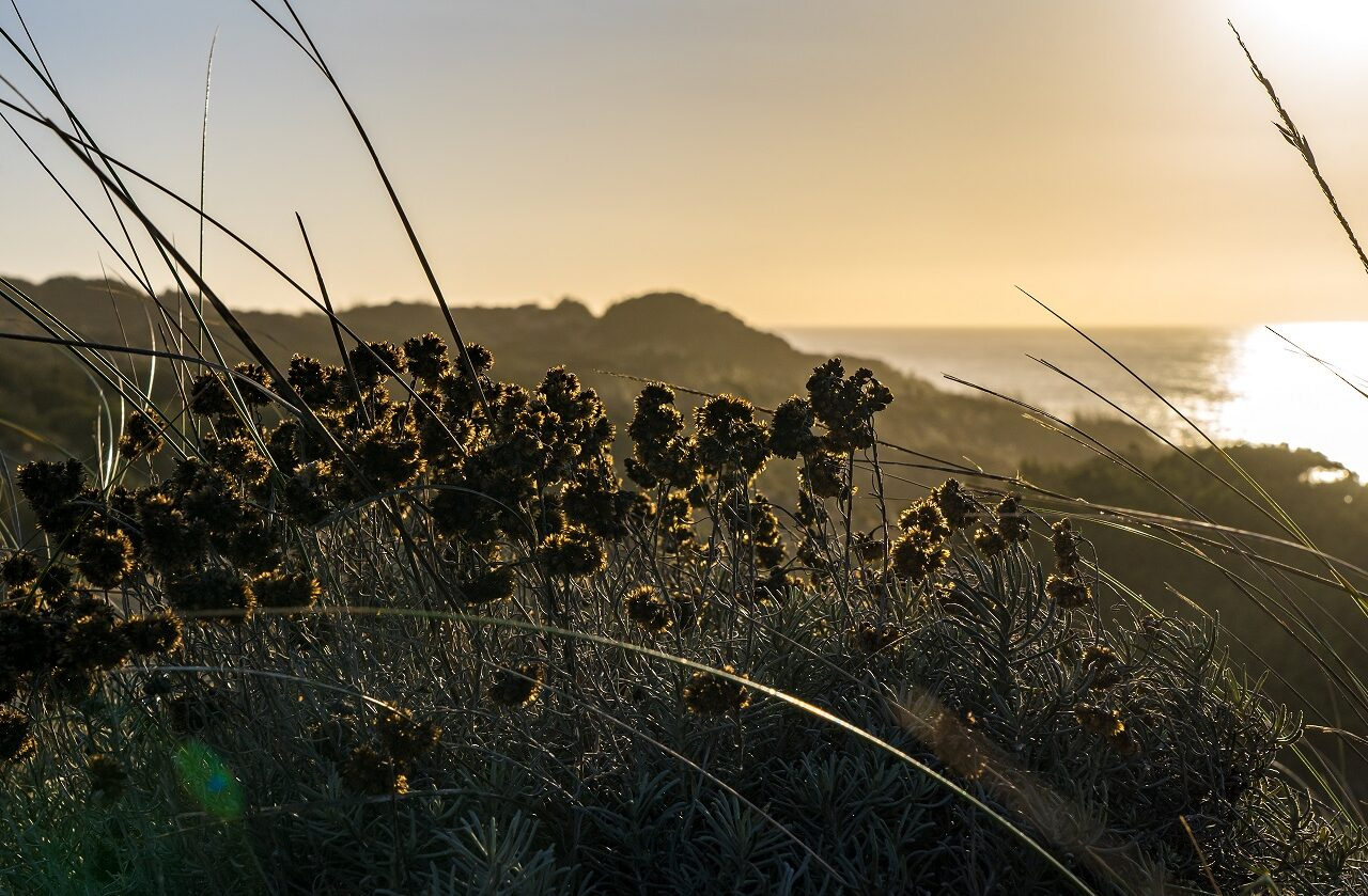 planten-kliffen-tijdens-zonsondergang-fisherman's-trail