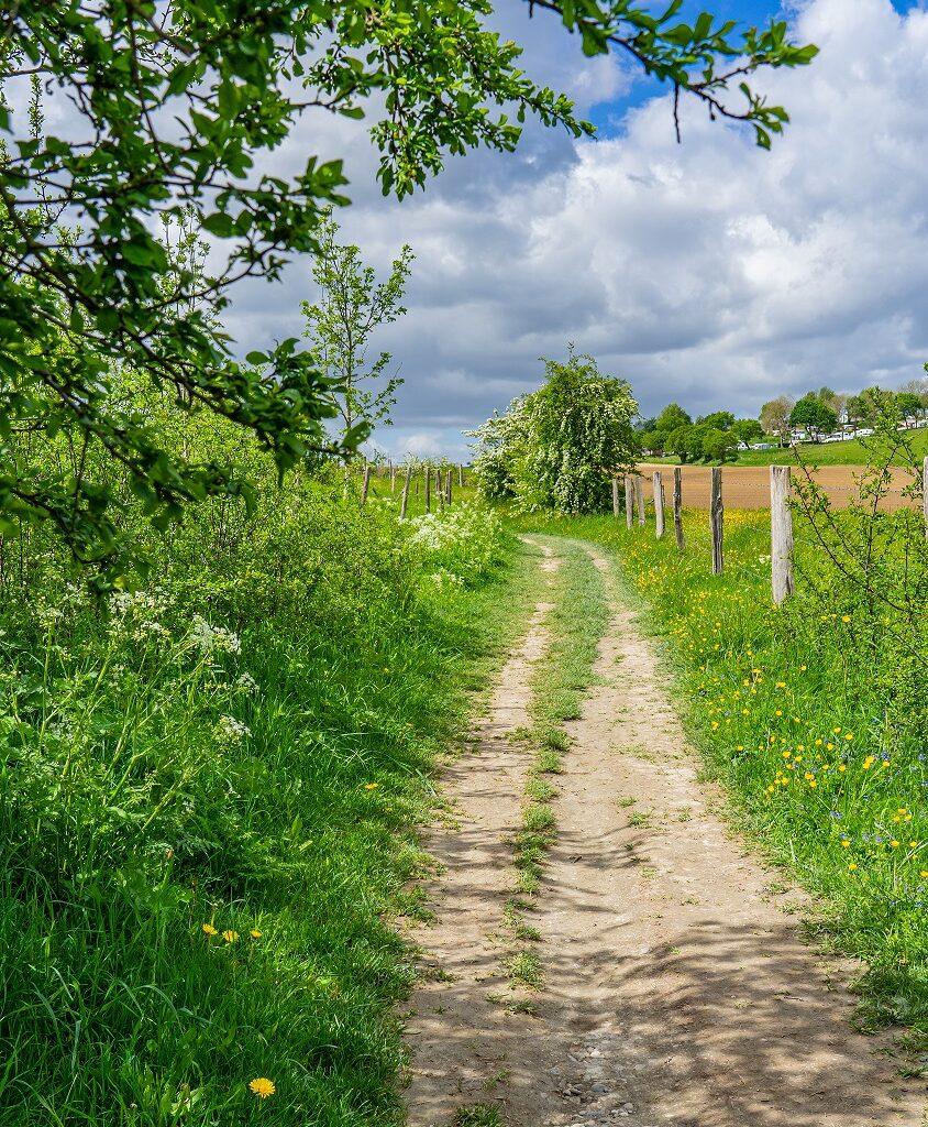 Wandelpad-Dutch-Mountain-trail